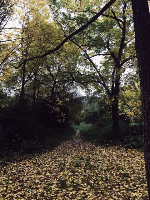 Villa Ada (my favorite and near home green spot) has the biggest urban forest of Europe. Come have a walk!