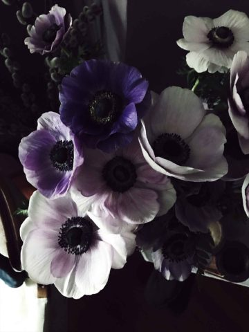 anemones: my Spring obsession