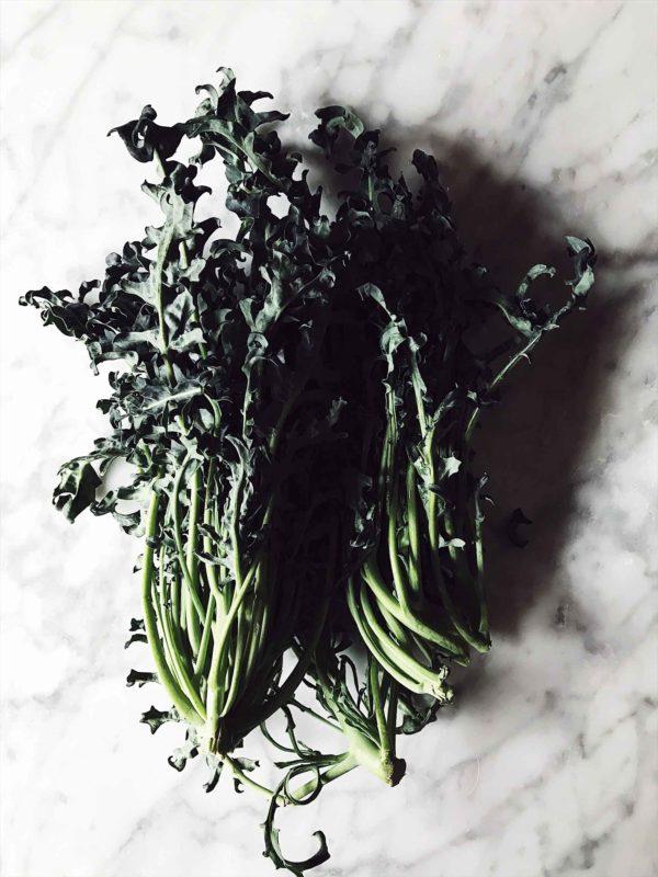 minestra nera: an Italian cabbage variety