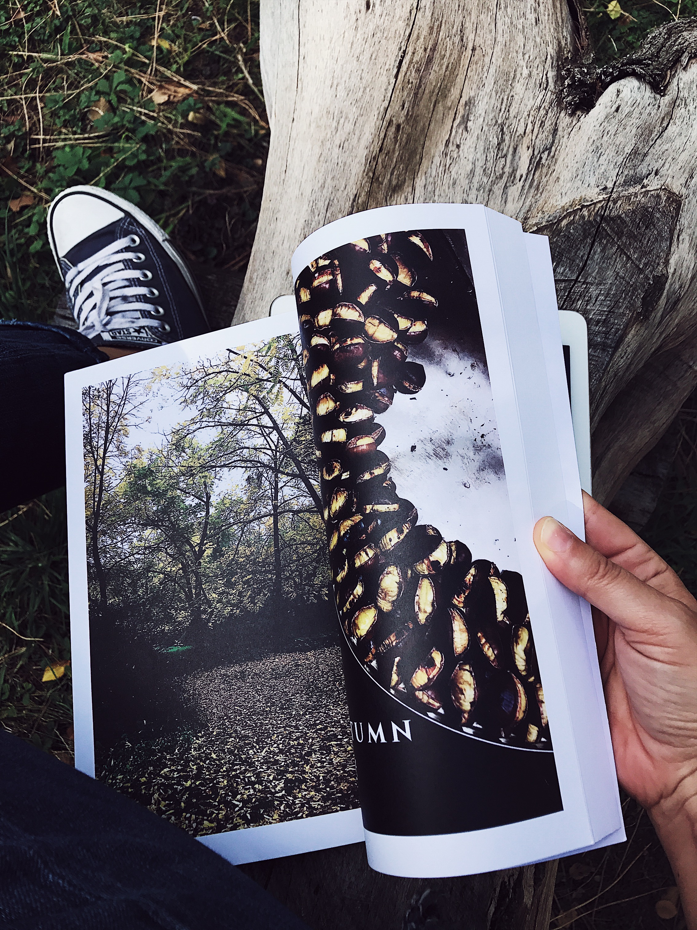 food magazine on a log and blue sneakers