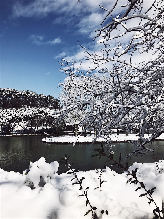 snowy lake and trees