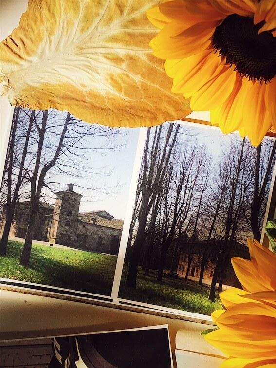 Modena journal