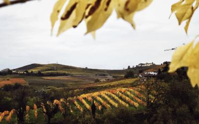 Alba, Italy | The Gourmet Mag