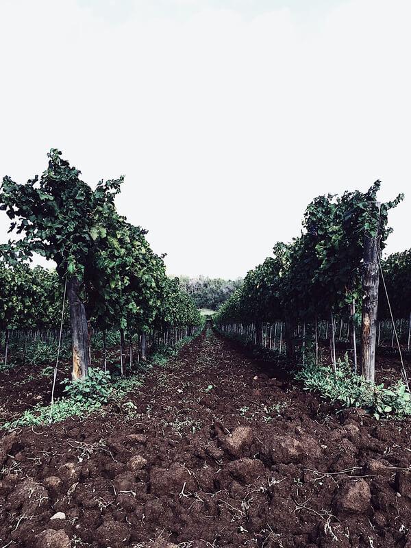 food magazine pic of a vineyard